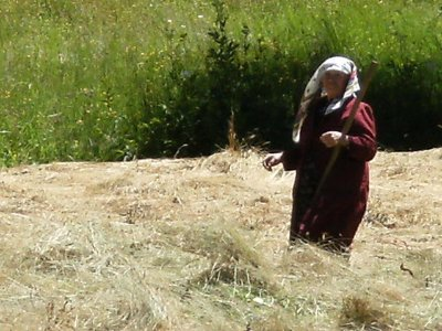 On the way to Batak - A local turns the hay.